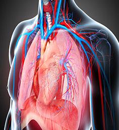 Cardio Thoracic and Vascular Surgery